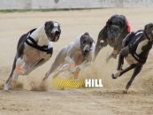SIS bought from WilliamHill the license for the broadcast of dog racing