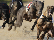 SIS forms greyhound streaming partnership with TopBetta TGT