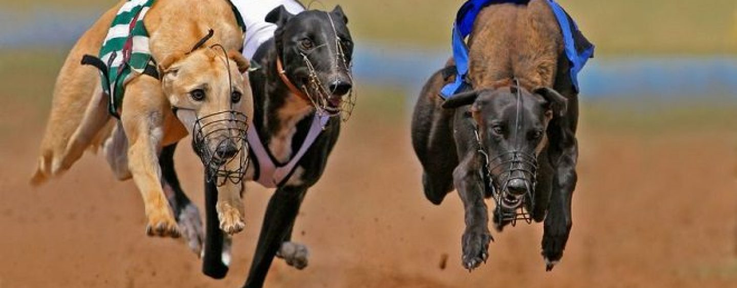 agreement struck over greyhound racing availability