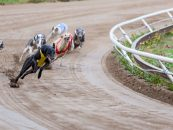 sis provides financial help british greyhound breeders forum