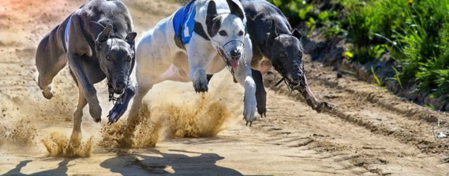 sis delivers greyhound content to watchandwager com