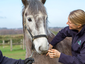 uk racing launches racehorse relief fund to maintain stud welfare