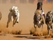 colossus bets backs greyhound grand national in five figure deal